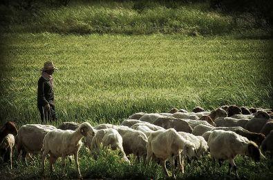 1024px-PikiWiki_Israel_16624_The_Shepherd